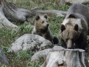 Boti - medve